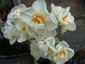 blandede billeder 20- april 2010 011