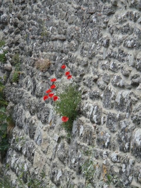 Assisi 2009 juni 957